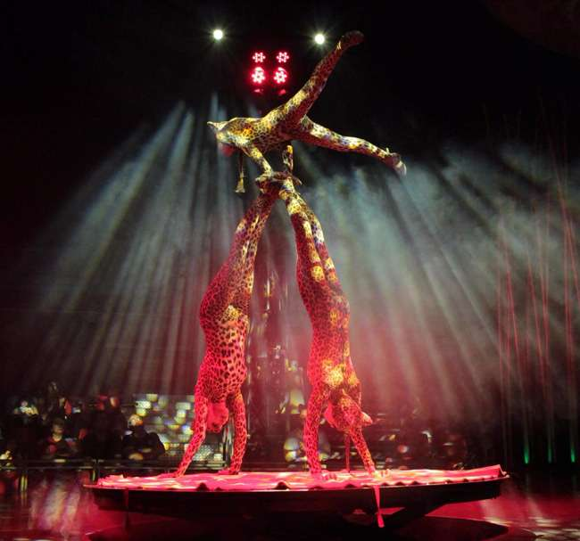salvaje-Il circo italiano-Ficoba-Irun