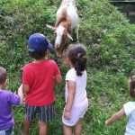 Lurmaitte: juego al aire libre en la naturaleza curso 2020-21
